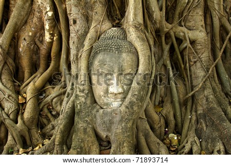 stone buddha head in the tree roots, Ayutthaya is old capital of Thailand