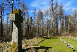 Stone crosses in a World War military cemetery.  They stand in front of dead spruce trees that have been the victims of climate change and continuing drought. Mountains Harz, Germany.