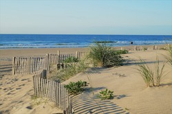 Stone Harbor Dunes. A quiet early morning scene of dunes leading to the beach in Stone Harbor before beachgoers crowd this New Jersey shore town. The dunes seen here are a protected ecosystem.