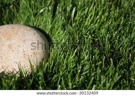 stone in yard