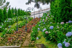 Stone ladder decorated by flowers of hydrangea in park of flowers Dalat Vietnam