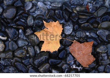 Stone of leaves