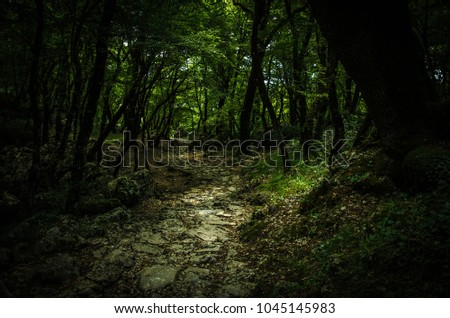 Stone path in a dense thick deep green forest near Monastery of Ostrog, Montenegro #1045145983