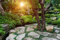 Stone pathway with green grass growing  between rocks around the  tree with waterfall flow through the Tropical Rain Forest with  fern plants and sunlight background at gardening.