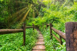 Stone pathway with wooden railing and sunray in dense forest in Mpumalanga South Africa
