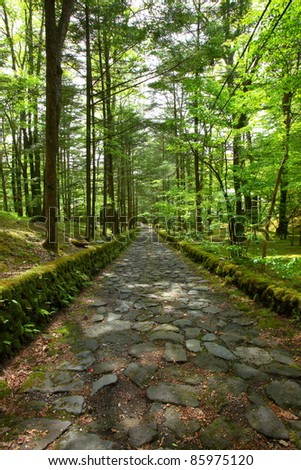 Stone paved road in forest, Nagano Japan