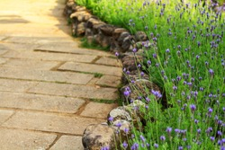 Stone pavement walkway in the garden With small purple flowers decorated
