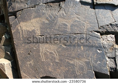 Stone plate with ancient petroglyphic image of three bulls. Area Tamgaly.