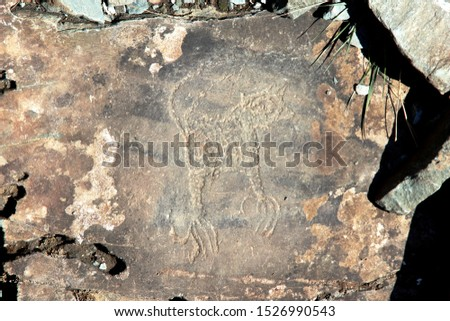 Stone, prehistoric rock paintings, history. Altai antiquity.