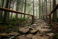 stone road in a coniferous forest in the mountains