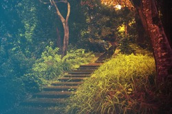 Stone staircase leading up a walkway through the forest.Filtered image: cool cross processed vintage effect.