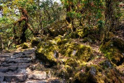 Stone stairs and an old  hiking trail in forest with mosses and rhododendrons. Trek in Himalayas. Nepal