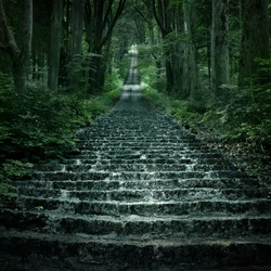 stone stairs in deep forest