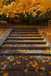 Stone stairs in the park covered with yellow autumn maple leaves