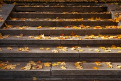 Stone stairs in the park, strewn with fallen autumn maple leaves