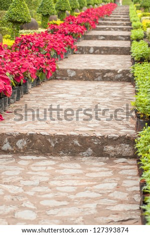 stone stairs landscaping in poinsettia garden