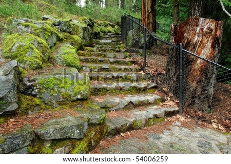 Stone stairway in rain forest at sooke potholes regional park, vancouver island, bc, canada