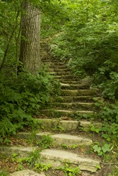 Stone Step Trail In Woods