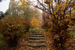 Stone steps in beautiful forest in fog in autumn. Colorful fall landscape with stone stairs, trees with orange foliage. Enchanted forest. Beautiful nature. Travel