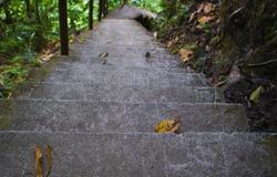 Stone steps leading down to jungle, concrete step path in jungles, going downstairs in jungles, exploring the jungles, going down by grey steps, grey stone path for hiking, hike in jungles, go down
