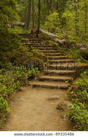 Stone steps on a hiking trail.