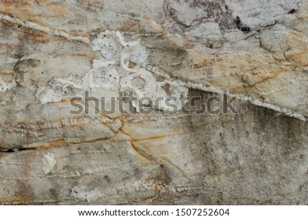 Stone texture , Stone  background,close up detailed texture of stone ,shell fossil