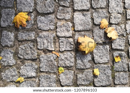 stone texture with leaves #1207896103