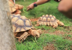 stone turtle feeding in home caring of animal with people