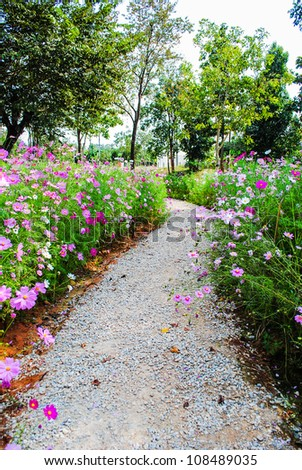 Stone walkway in the park with beautiful pink flowers.