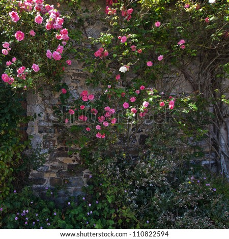 stone wall with climbing roses