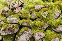 Stone walls are the fence of an old abandoned farm. . The stones are covered with green moss. Region Podlasie, Poland.
