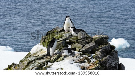 Stone with the penguins over the Atlantic Ocean