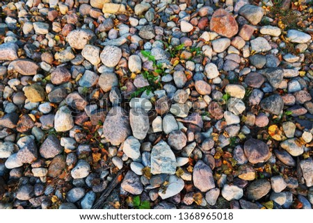 Stones background. Natural stones pattern with grass and autumn leaves on the coast                       #1368965018