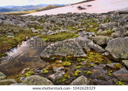 Stones covered with lichens in Dovrefjell National Park, Norway #1042628329
