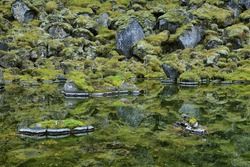 Stones in clear lagoon of Asbyrgi national park, Iceland.