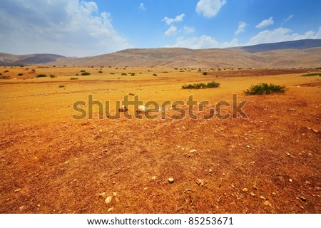 Stones in Sand Hills of Samaria, Israel