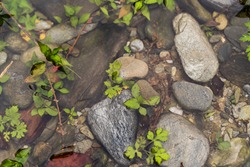 Stones in water with green plants, abstract background, stock photo