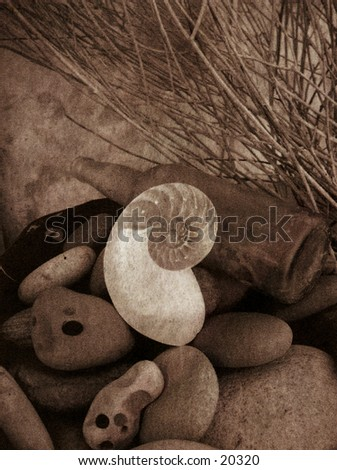 Stones,nautilus shell, and old bottle still life. this image has been mix media processed and has a gorgeous arty texture.