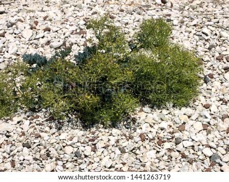 stones on the seashore, rocky seashore #1441263719