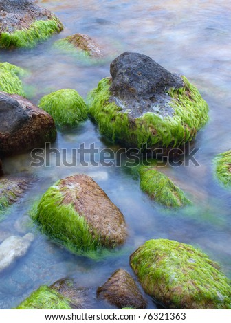 http://image.shutterstock.com/display_pic_with_logo/688576/688576,1304259891,6/stock-photo-stones-with-algae-on-the-seashore-composition-of-nature-76321363.jpg