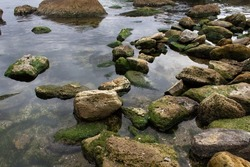 Stones with green moss into calm water on sea beach coast view nature environment concept