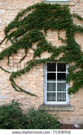 Stonewall window and ivy