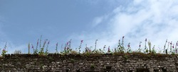 Stonework of old castle with flowers and grass against pale blue sky