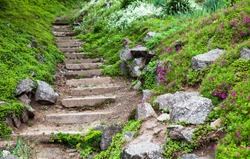 Stony stairs in the green blooming garden.