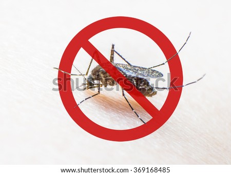 Stop/ prohibit sign on mosquito on human skin w/ human blood in insect stomach: Tropical animal, danger bacteria carrier cause dangerous illness/ disease- zika virus, malaria, flavivirus, dengue, gnat