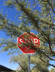 Stop sign peeking out behind tree