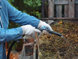 Storing organic fertilizers in compost heaps. A woman sprinkles a manure heap from waste and animal manure with water for early decay.