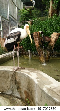 Stork. A long beak bird that usually migrates in flocks.