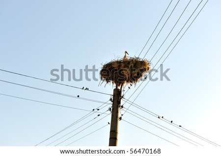 Stork and sparrows around