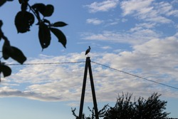 Stork bird sitting on column in cloudy summer latvian nature  apple trees bush electicity wires blue sky northen ornithology back and white moody